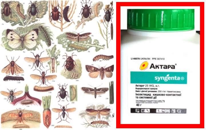 Актара от насекомых