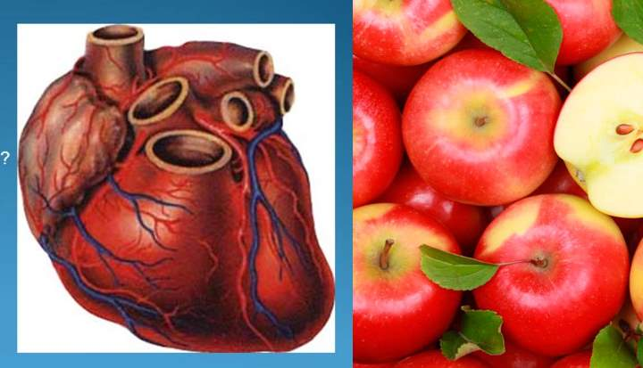Сердце лучше работает от яблок