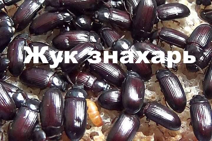 Много жуков