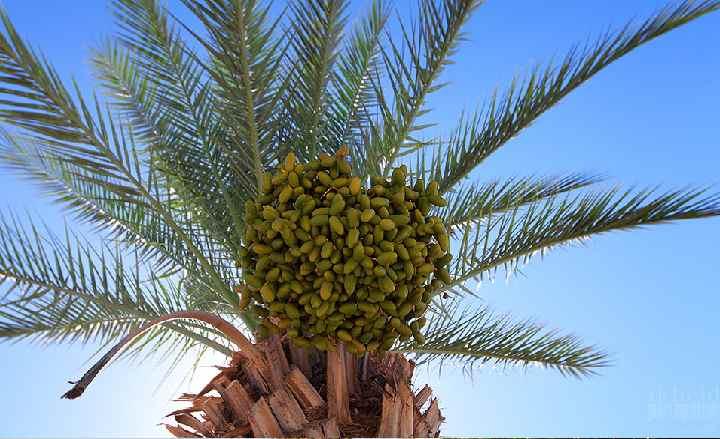 Вид снизу пальмы