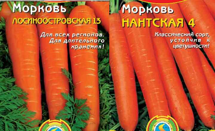 2 сорта морковки