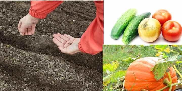 Земля для моркови