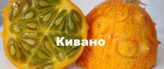 Оранжевый плод кивано