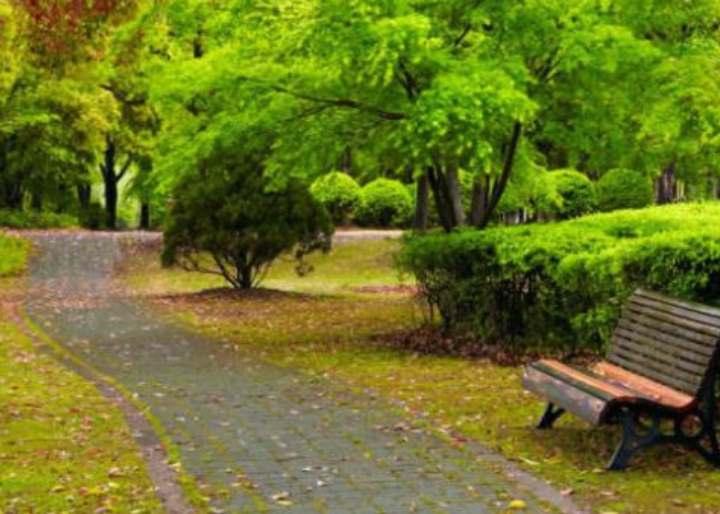 Зеленые насаждения в сквере