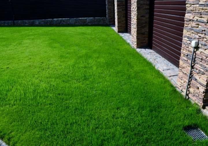 Ковер травы с овсянницей
