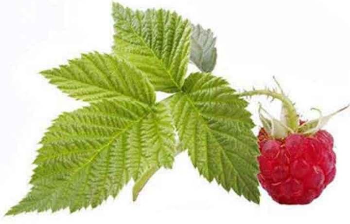 Лист малины и ягода