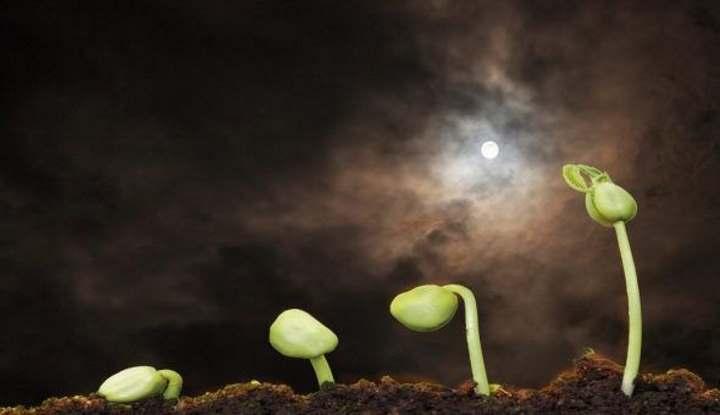 Как развивается росток