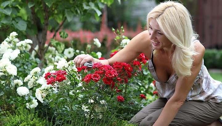 Место в саду под розы