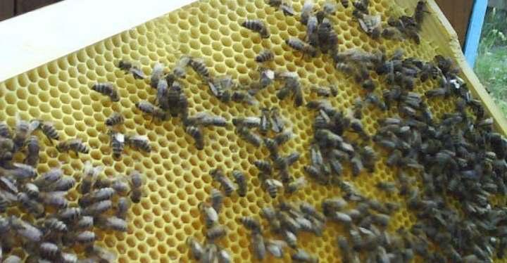 Пчела на матрице