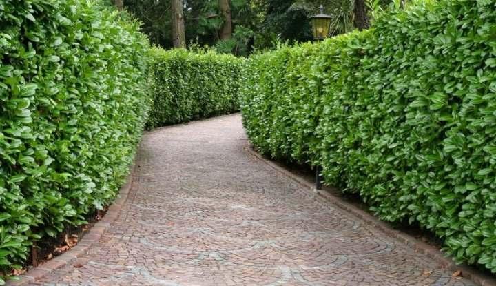 Кусты в изгороди из растений