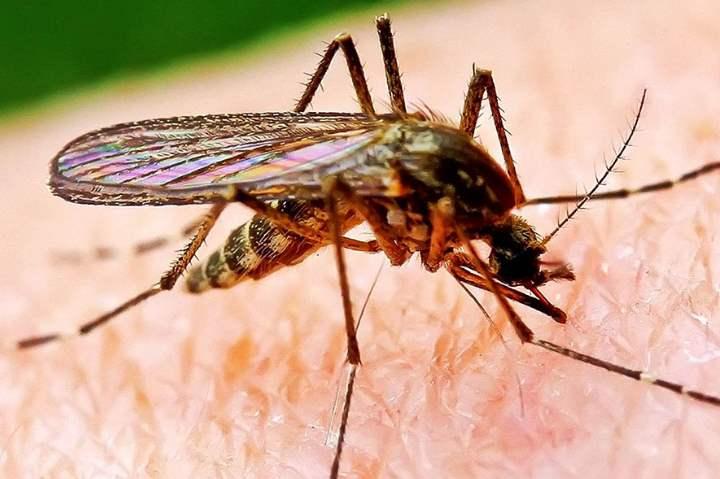 Крупным планом комар