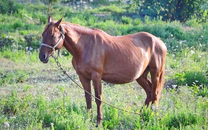 Как в домашних условиях определить вес взрослой лошади