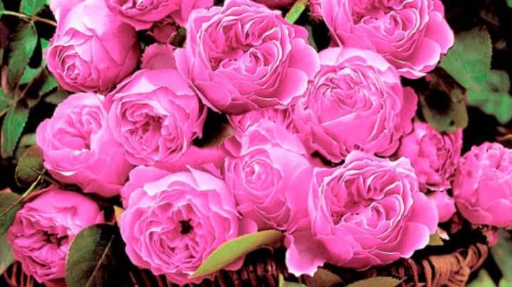 Цветки, собранные в соцветия