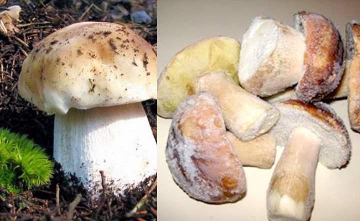Целиком заморозить грибы