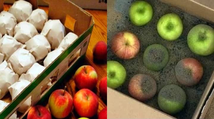 Самое большое внимание уделяют зимним сортам яблок, ведь они могут пролежать всю зиму.