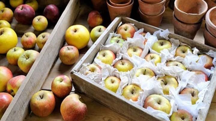 Длительное хранение яблок возможно в домашних условиях