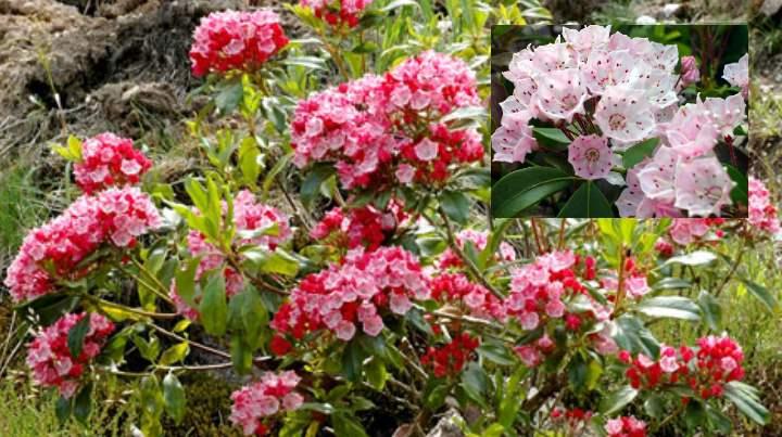 Соцветия цветка