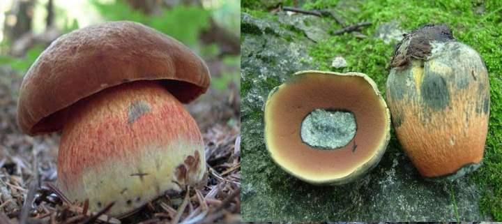 Под шляпкой гриба