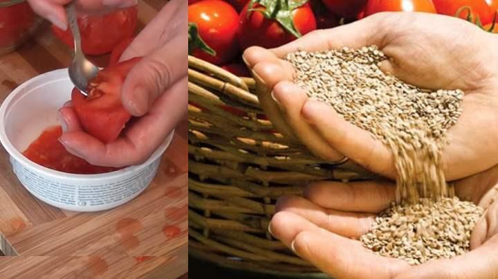 Сбор и сушка семян