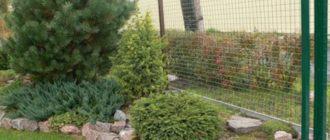 Дизайн двора с елью