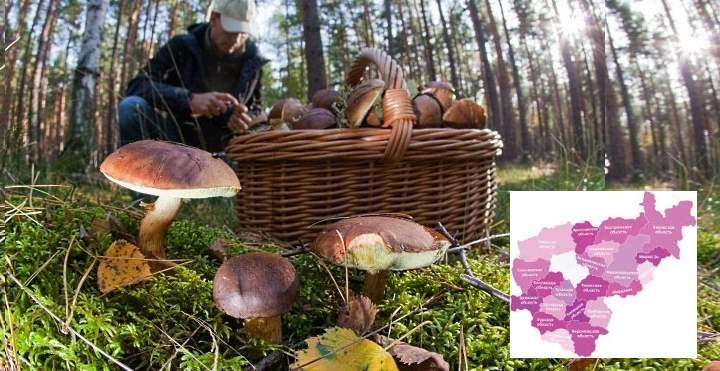 Карта СП РФ - грибы