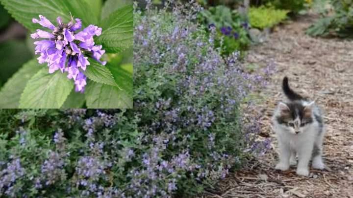Для выращивания больших и обильно цветущих кустов, нужно выбирать солнечные места
