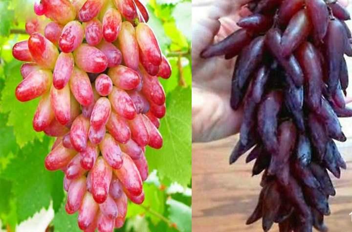 Гроздья с виноградом