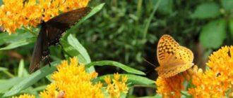 Когда растения цветут, пчелы собирают образованную пыльцу