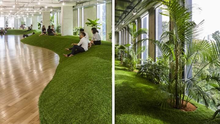 Точных мест для размещения офисных растений в помещении не существует