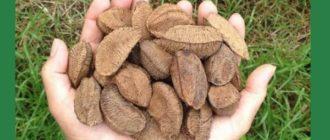полезные свойства и противопоказания ореха