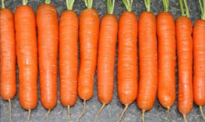 Сорта морковки
