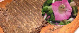 Сам процесс выращивания не составляет никакой сложности, он растет так же, как и любая садовая культура, со своими небольшими особенностями.