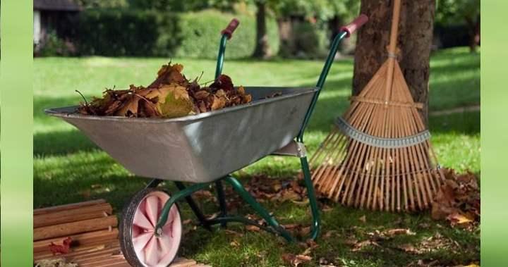 Как убрать старую листву
