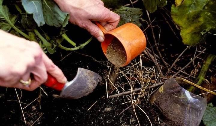 Как удобрять землю