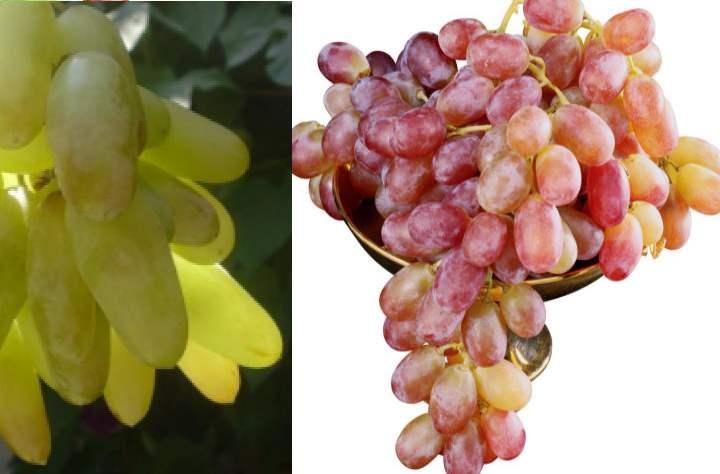 Фото с виноградом