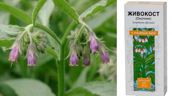 При отравлении растением наблюдается повышенное слюноотделение