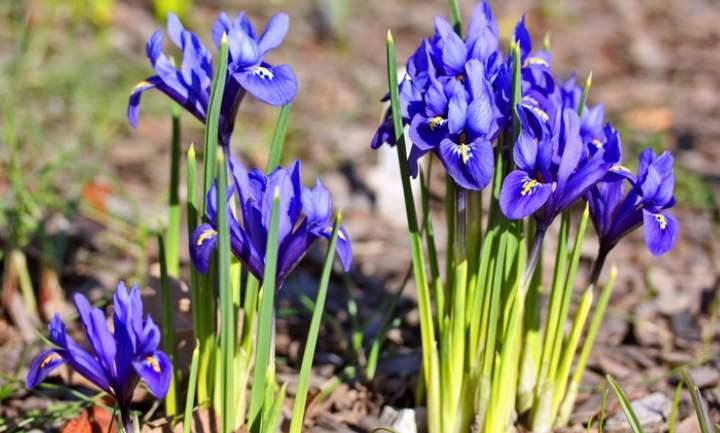 неприхотливые маленькие цветочки, цветущие в апреле