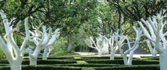 Побелка в жизни деревьев имеет большое значение