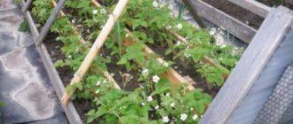 Подходят вертикальные грядки для цветов, зелени и клубники