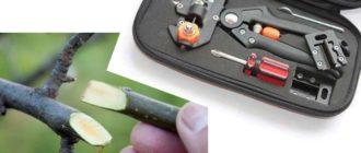 Секаторы способны срезать ветку с максимальным диаметром