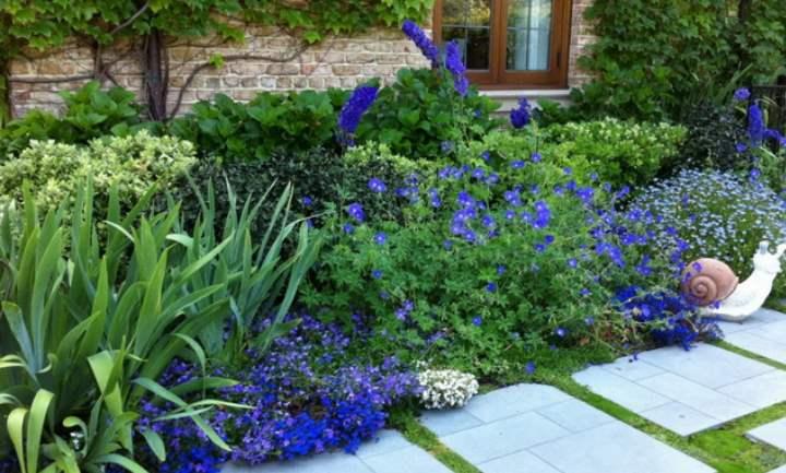 Виды садовых растений, цветущих голубыми оттенками