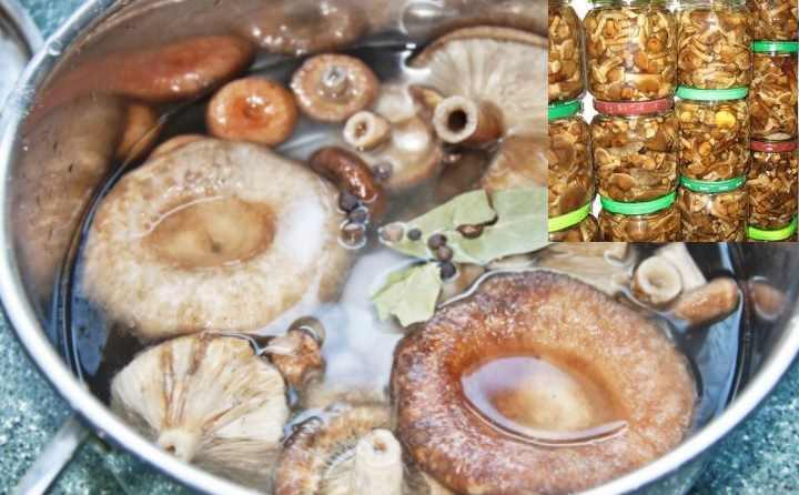 способ с предварительным отвариванием грибов перед солением