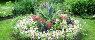 Для таких дачников существуют неприхотливые цветы в саду