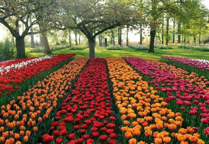 Голландия в саду