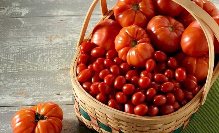 Как правильно подготовить семена томатов для посева