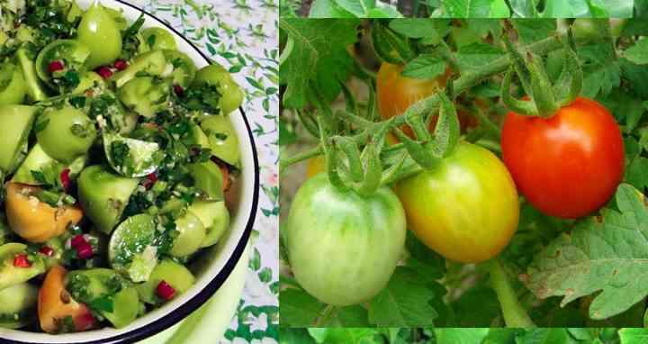 «Сумасшедшие» зеленые помидоры