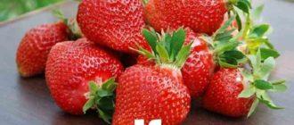 Клубника имеет сочную, мясистую мякоть и легкий ягодный аромат.