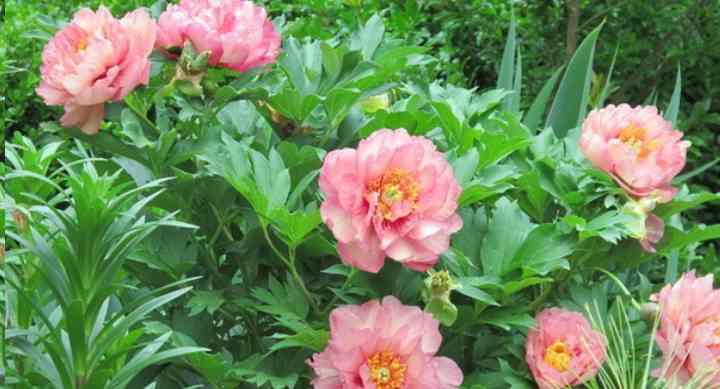 Эстетичный вид цветка