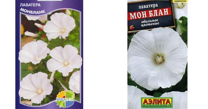 Исключительно красивые белоснежные цветки