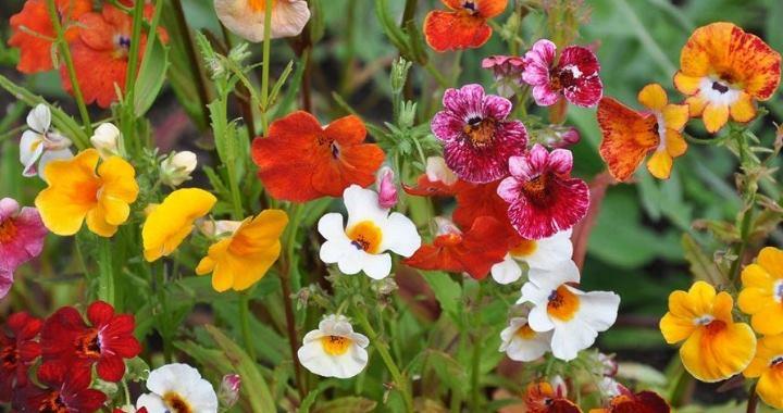 Растение хорошо переносит период засухи